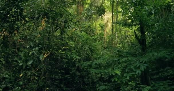 Esőerdők, buja nedves erdők