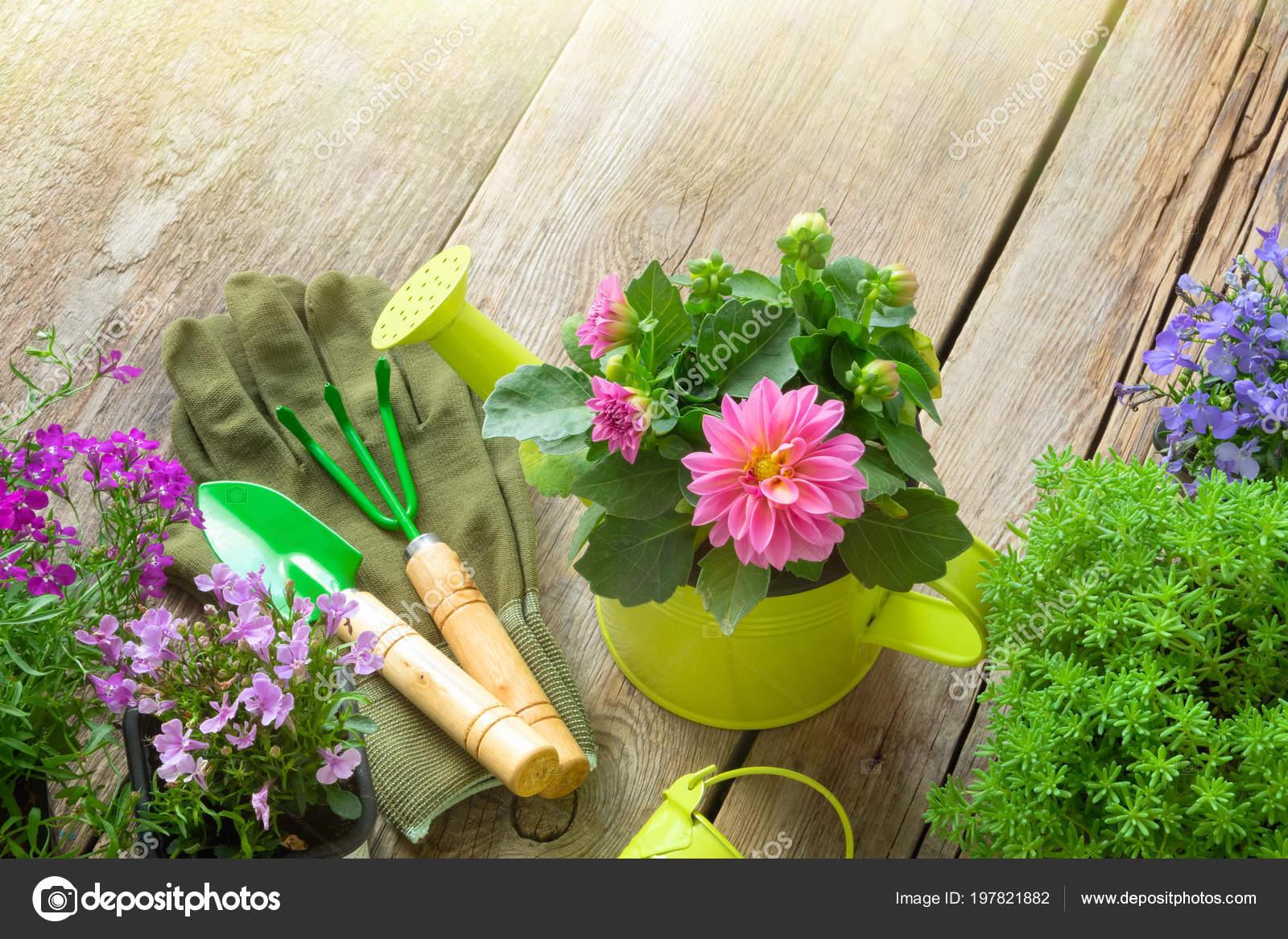Bahçede çiçek dikim