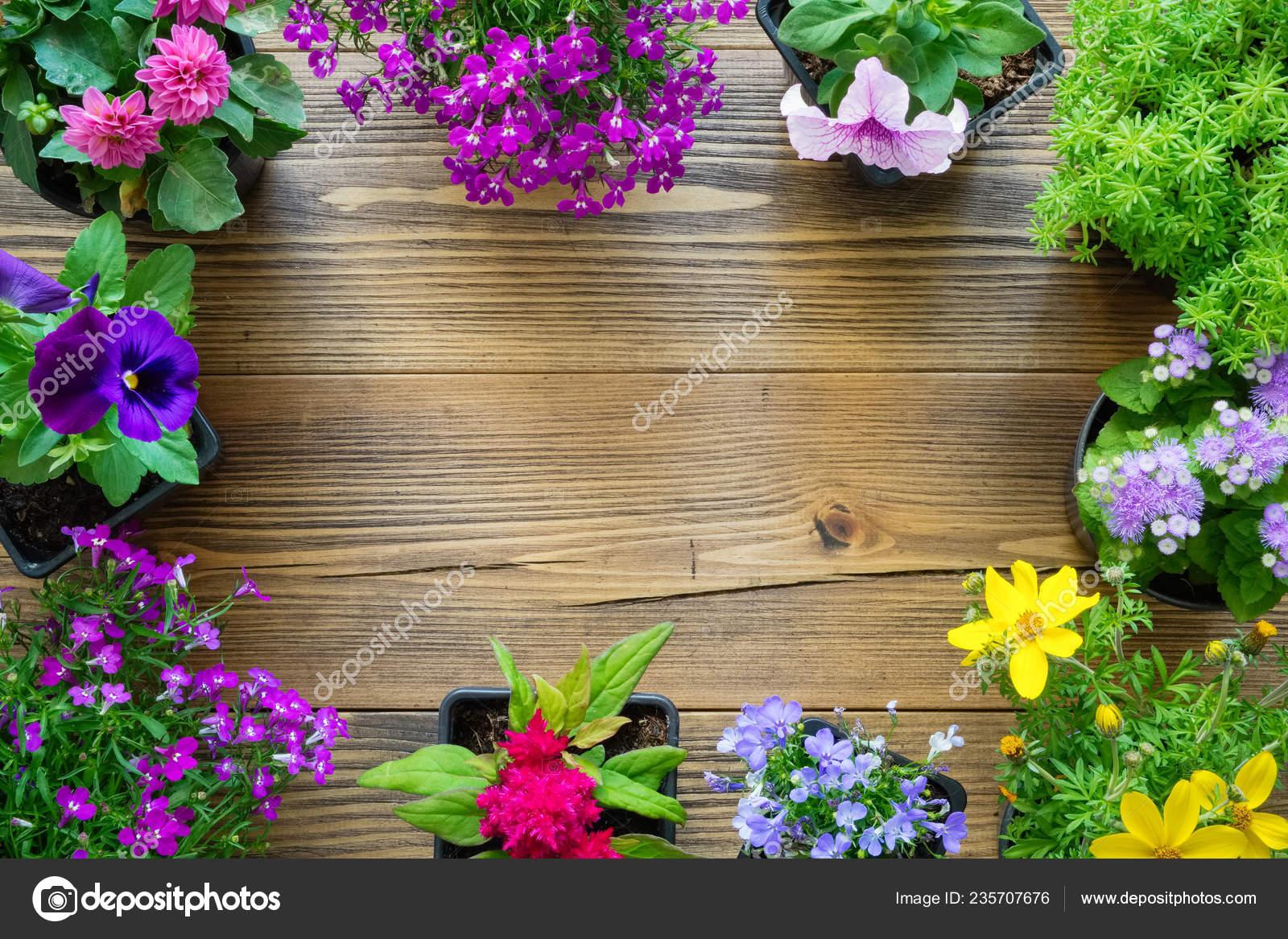 Dekoracyjne Obramowania Sadzonki Roślin Ogrodowych Piękne
