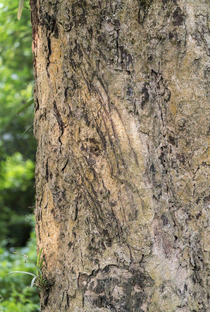 фотографии, вспомнил царапины на дереве от когтей медведя фото если камера