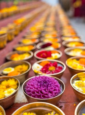 Buddhist flower offerings or gifts in bowls and rows. Buddhism religion offering in a temple