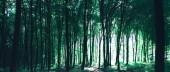 zelené lesní stromy, příroda, zelené pozadí