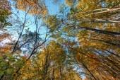 albero della foresta. secco frondeggia sfondi