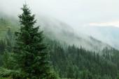 Hegyek erdőkkel. Kárpátok hegységei