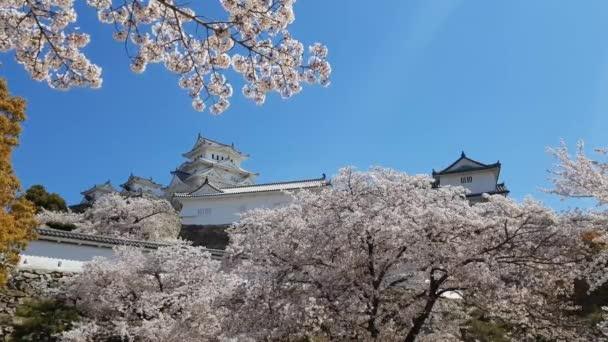 Třešňový květ a hrad Himeji v Japonsku