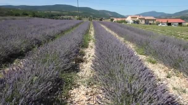 Levandulové pole v Provence, jižní Francie