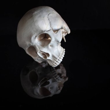 Human skull. Halloween. On black glossy background with reflection