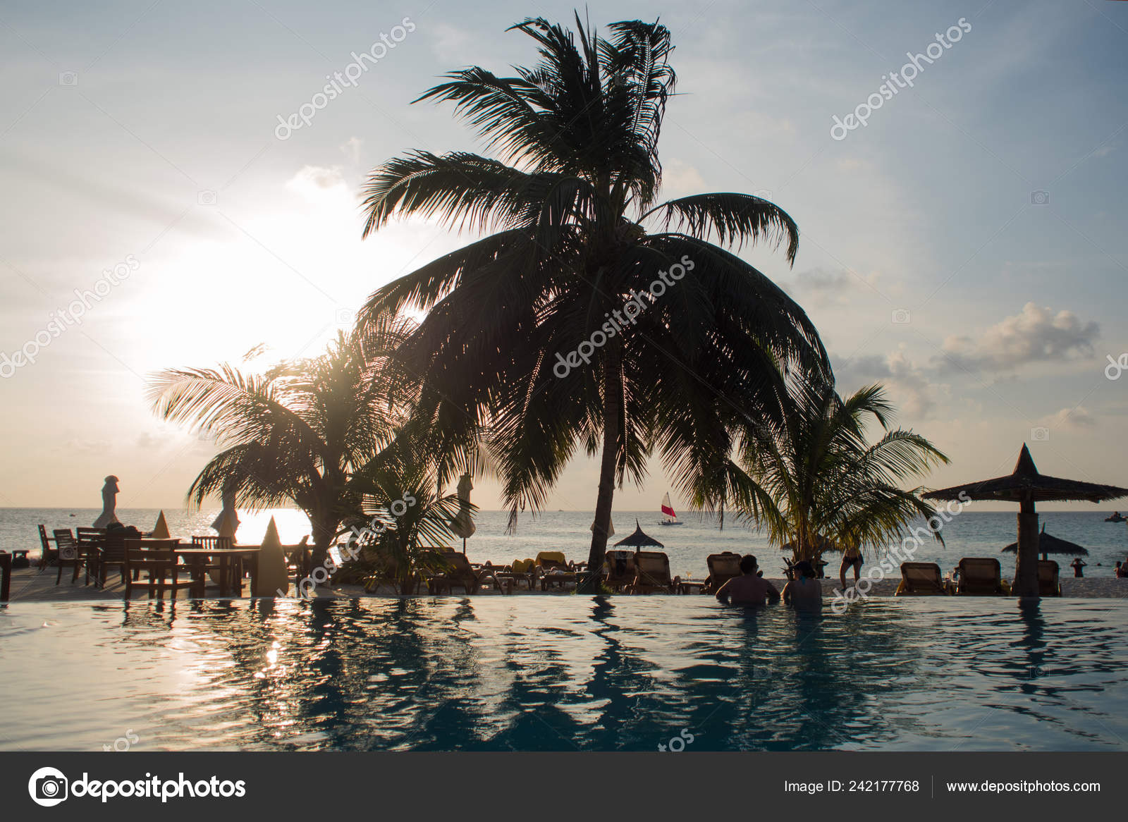 Blue Water In The Swimming Pool And Fluffy Palm Trees