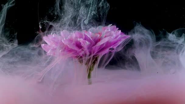 Virág a víz alatt és fröccsenő színes tinta, élénk színek