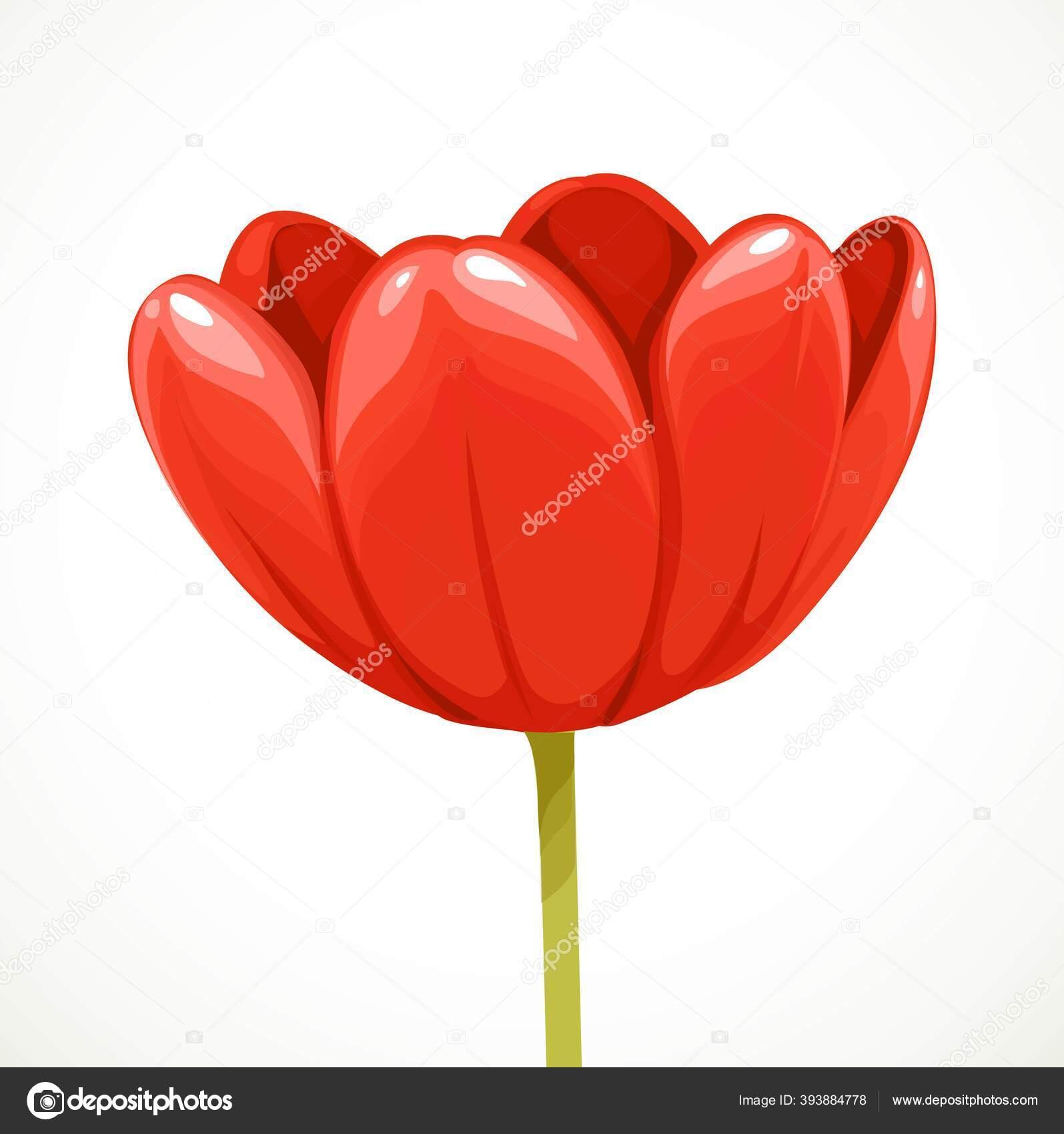 Merah Bunga Tulip Mekar Profil Terisolasi Pada Latar Belakang Putih Stok Vektor C Yadviga 393884778