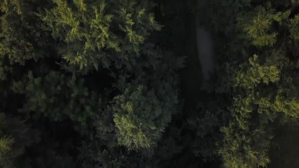 kamera se pohybuje, vynořující se z zelený Les