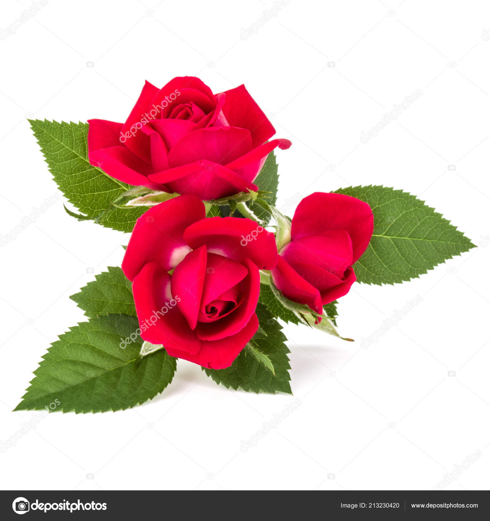 Red Rose Flower Bouquet Isolated White Background Cutout Stock
