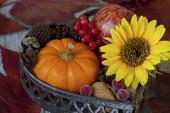 Autumn Flower Still Life With Pumpkin