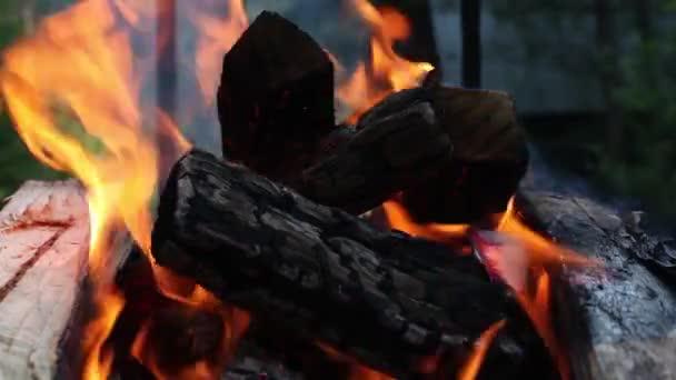 Fák és parázs égetése tűzről elvont háttérrel.