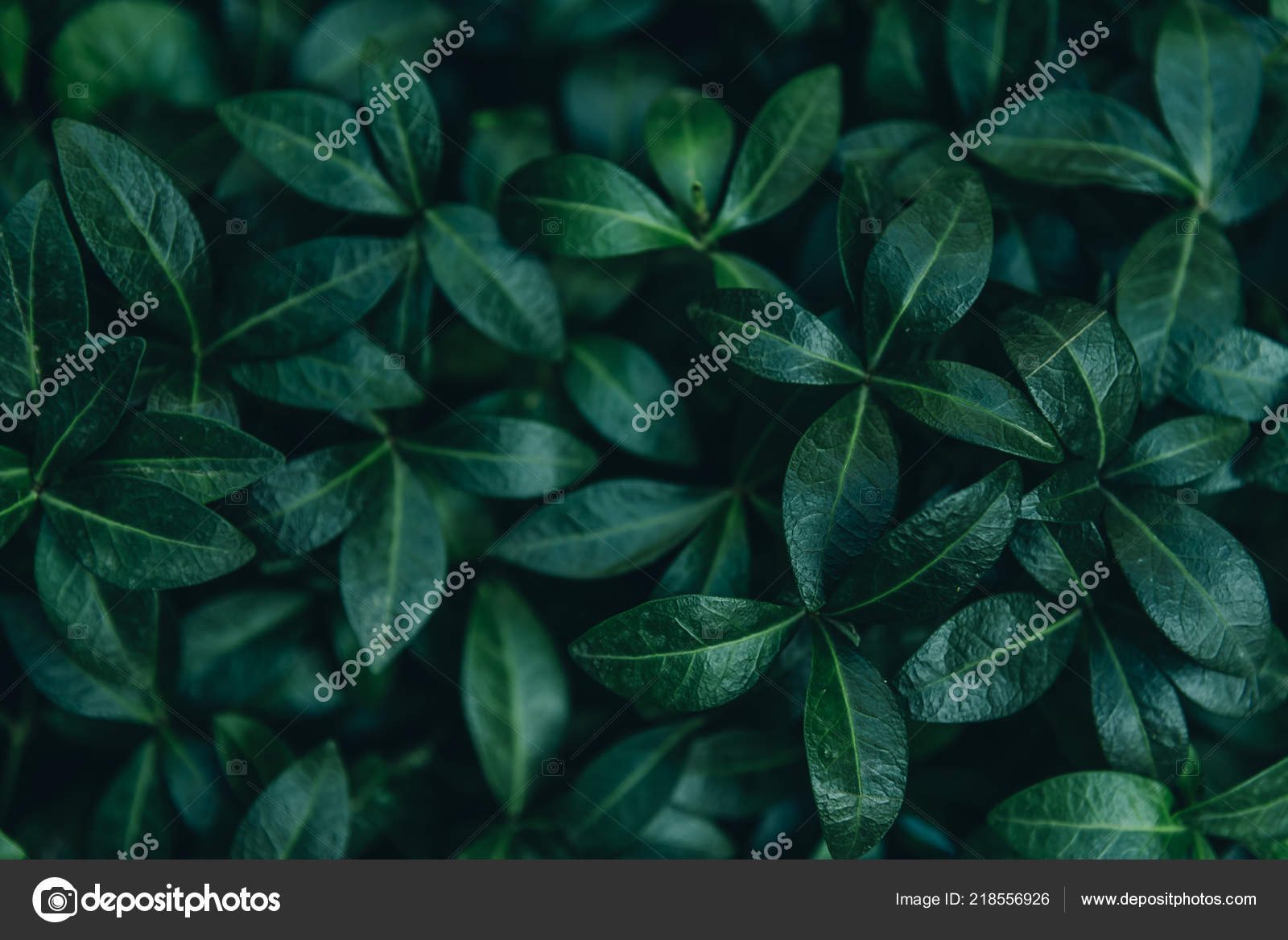 Dark Leaves Wallpaper Abstract Natural Leaves Background Dark