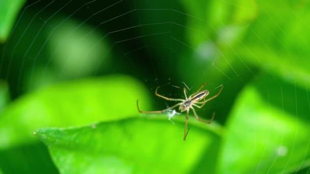 Spider spřádá web