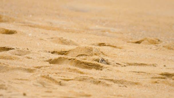 Krab na pláži
