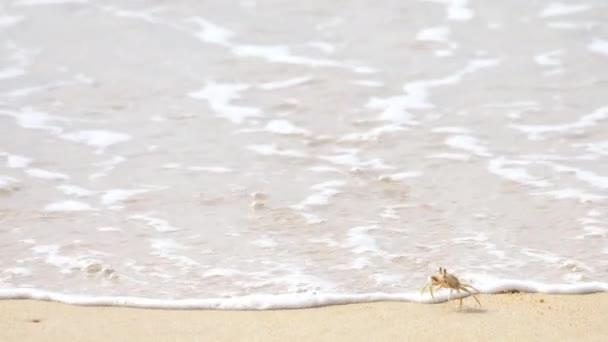 Krabi, rohatou duch krab nebo roh očima Ocypode duch krab ceratophthalmus v písku na pláži