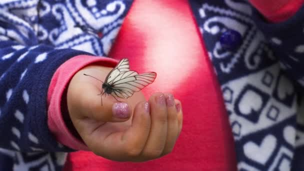 Butterfly sitting on the child palm