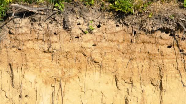 Rychlé hnízdo s kočkama na kopci