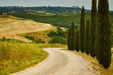 Tuscany hills nature landscape stock vector