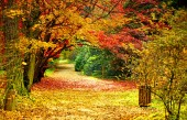 Fotografie Krásné zářivé podzim podzim listí barvy v lesní krajině a silniční, horizontální