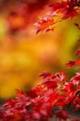 Sezóny krásné podzimní listí