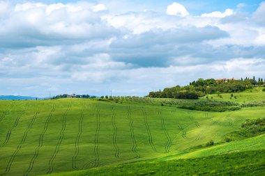 """Картина, постер, плакат, фотообои """"красиво освещенный пейзаж тосканы. зеленые холмы """", артикул 279907926"""