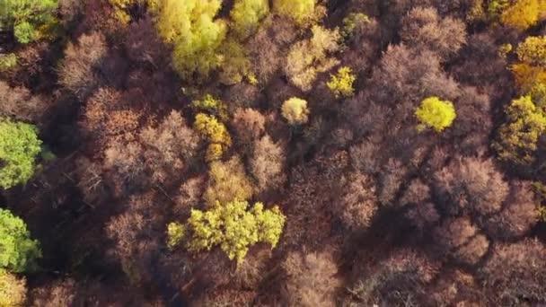 Letecký pohled na řízení motorových vozidel po podzimní lesní cesta. Malebnou podzimní krajinou