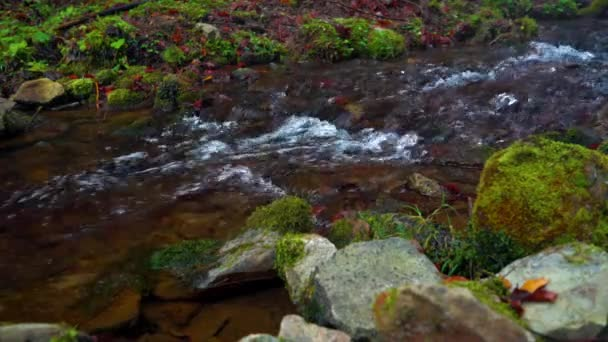 Picturesque mountain river close up