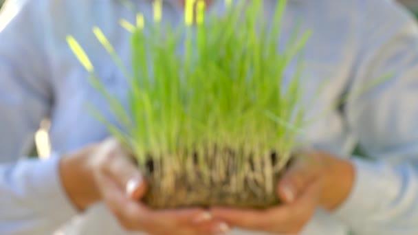 Ženské ruce natáhněte hrst zeminy s trávou. Koncepce růstu, péče, udržitelný rozvoj, ochrana životního prostředí země, ekologie a zelené