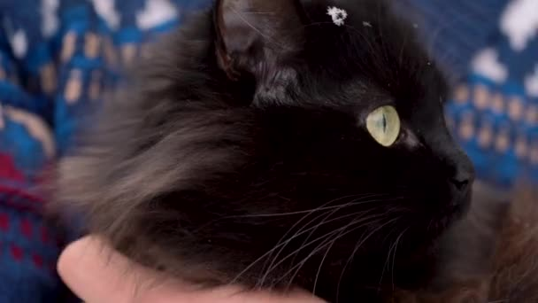 Black cat is held on its hands outdoors in the winter, with snowflakes on its fur