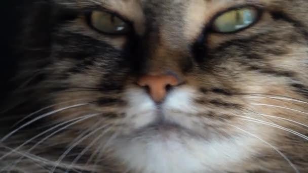 Roztomilý ústí mourovatá kočka domácí zblízka