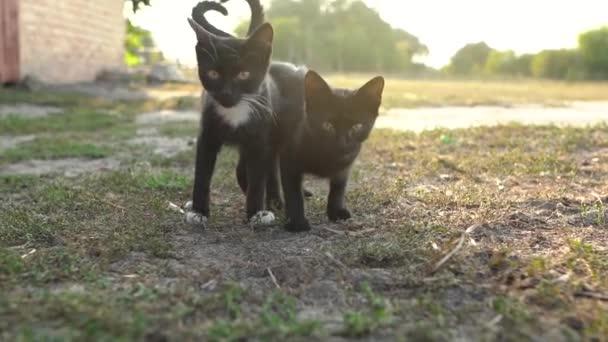 Portrét bezdomovců rozkošně černých a bílých koťat venku