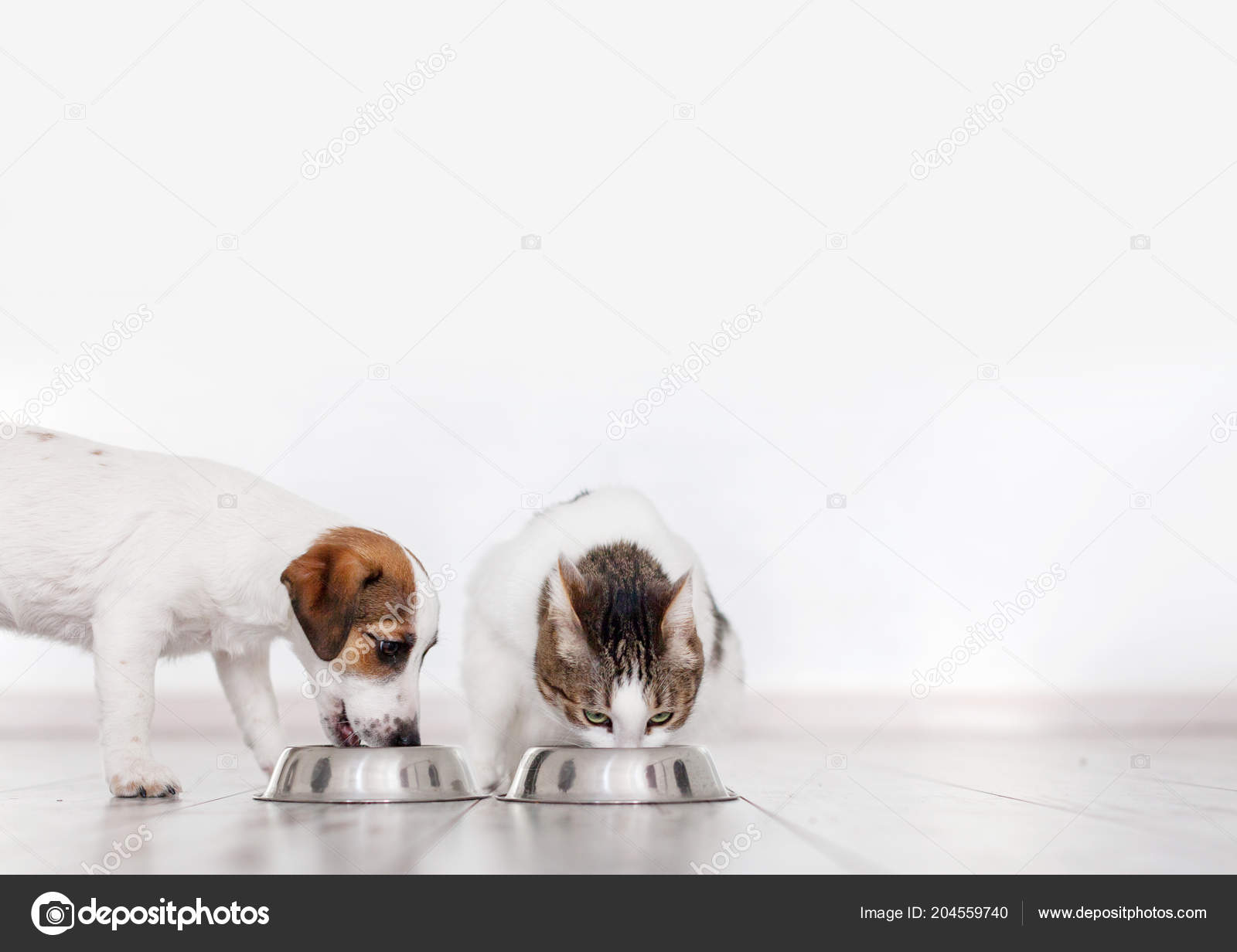 Dog Cat Eating Food Puppy Eating Dogs Food Pets Home Stock Photo