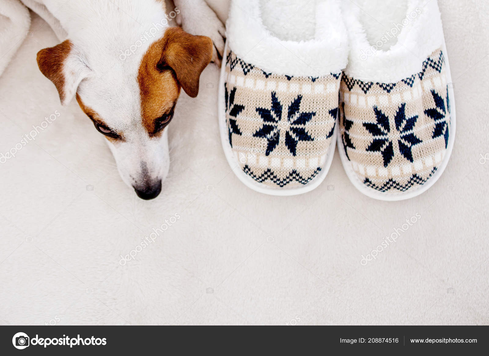 Tappeto Morbido Per Cani : Cane vicino pantofole sotto tappeto accessori casa accogliente