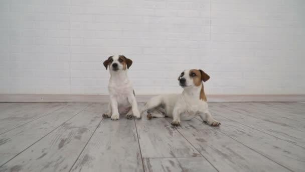 Két kutya ül otthon