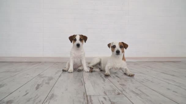 Zwei Hunde zu Hause