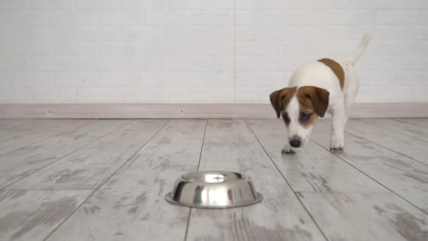 Hund frisst Futter aus Schüssel