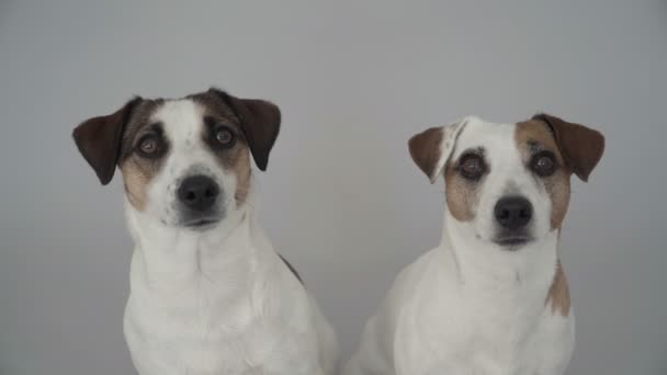 Two dogs sitting at home