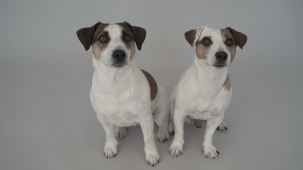 zwei Hunde zu Hause sitzen