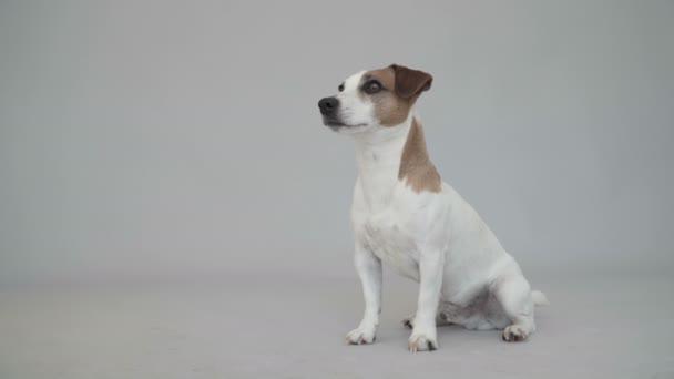 Chytrý pes udělá kotrmelec