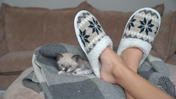 Roztomilá šedá kočička je na pohovce v přikrývce