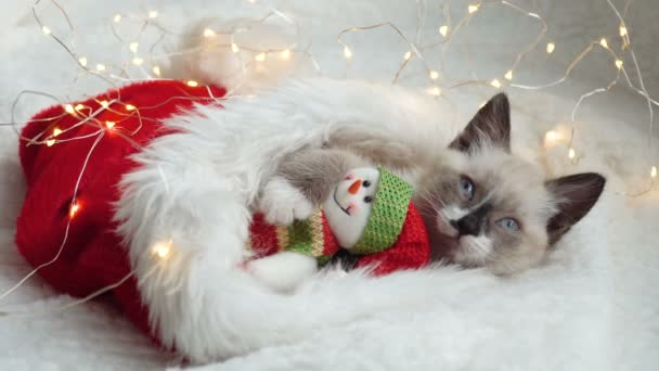 Kočička blízko světla a vánoční klobouk