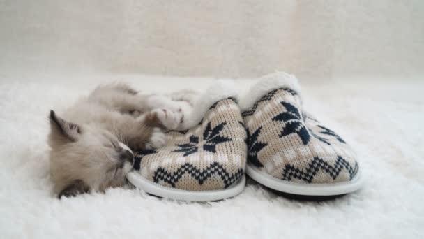 Kotě spát na kostkované u domácích pantoflí