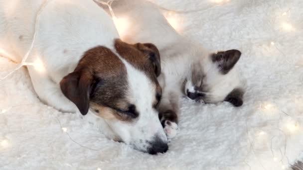 Pes a kočka spí pod vánoční světla