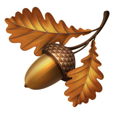 Vector illustration - oak branch with acorns and leaves
