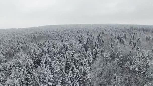 4 k. letu a startu nad zimní les na sněžení na severu, letecký panoramatický pohled.