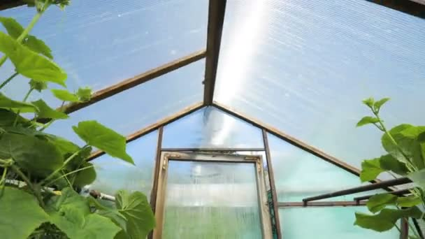 Cool A Small Greenhouse A Lot Of Long Rows Of Plants Indoor Greenhouse Farms Interior Design Ideas Philsoteloinfo