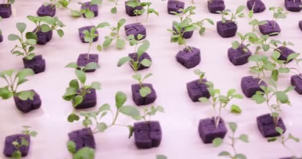 Led Uv Pour La Croissance Lampes AgricoleLumières Des De Grow Sur PlantesCulture Végétale Hydroponique nP8X0wOk